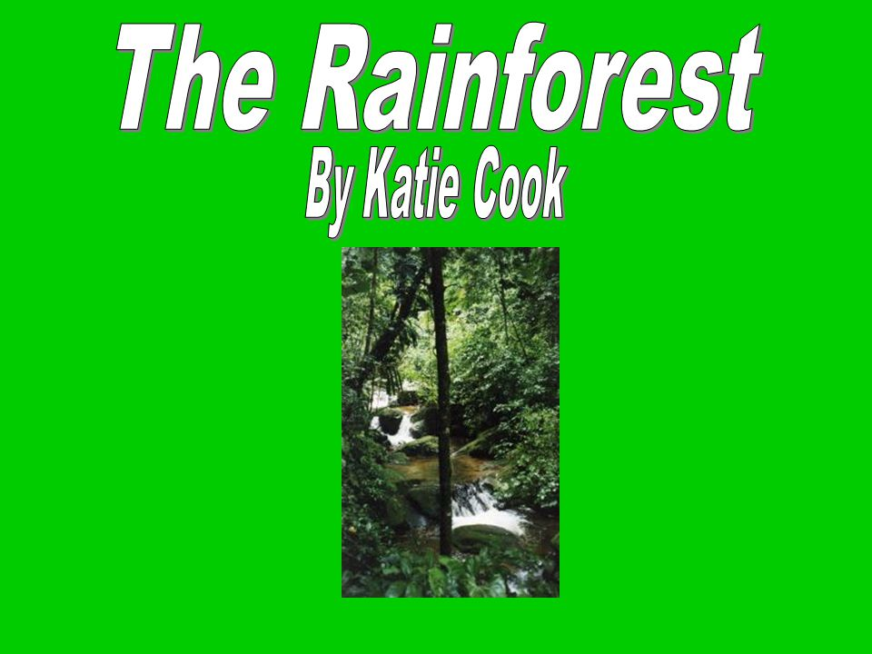 The Rainforest By Katie Cook