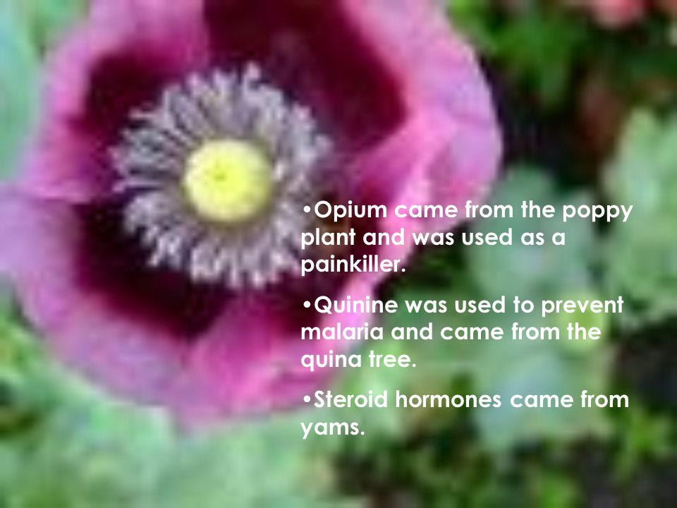 Opium came from the poppy plant and was used as a painkiller.