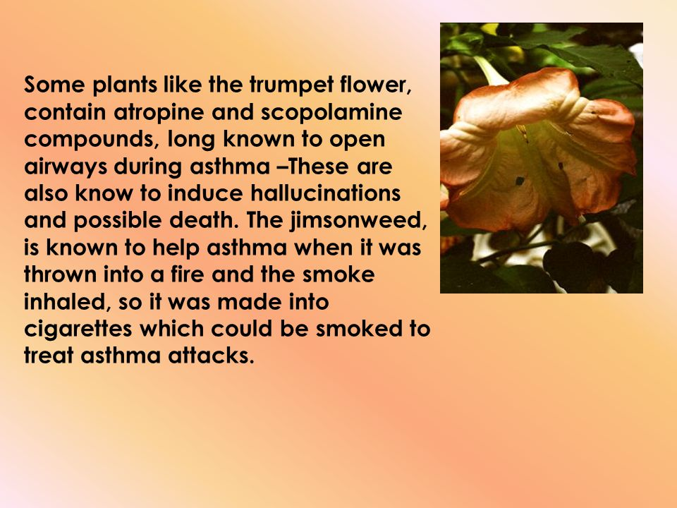 Some plants like the trumpet flower, contain atropine and scopolamine compounds, long known to open airways during asthma –These are also know to induce hallucinations and possible death.