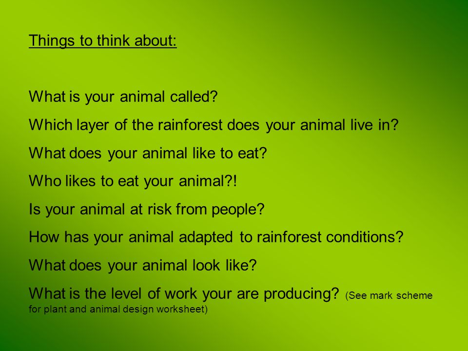 Things to think about: What is your animal called Which layer of the rainforest does your animal live in
