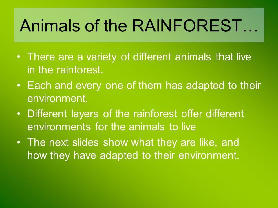 Animals of the RAINFOREST…