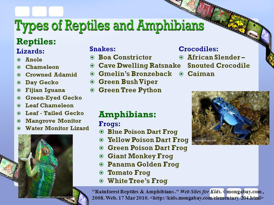 Reptiles: Amphibians: Lizards: Snakes: Boa Constrictor