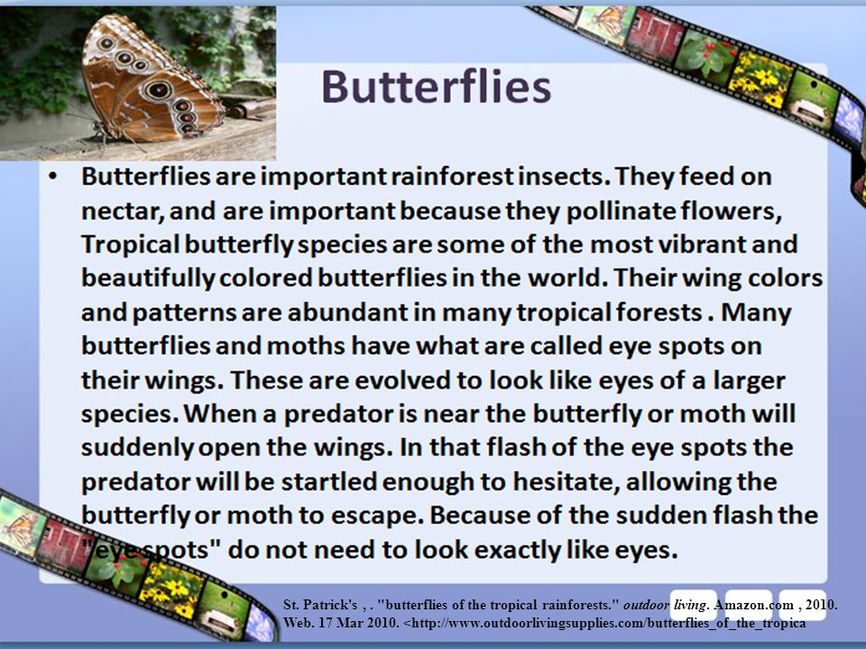 St. Patrick s ,. butterflies of the tropical rainforests