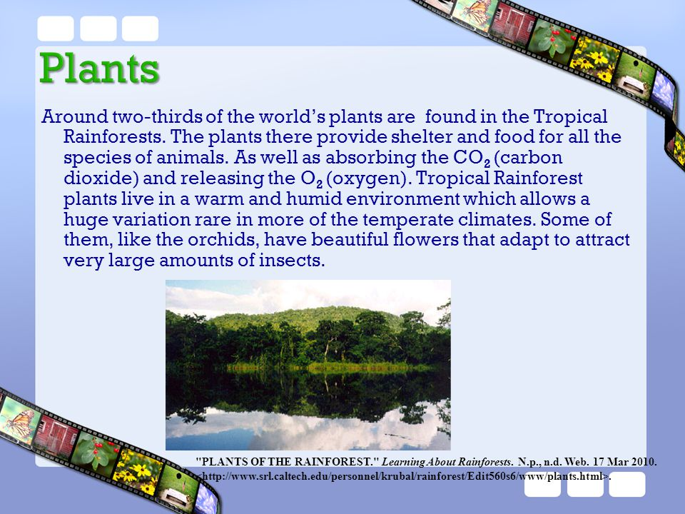 Around two-thirds of the world's plants are found in the Tropical Rainforests. The plants there provide shelter and food for all the species of animals. As well as absorbing the CO2 (carbon dioxide) and releasing the O2 (oxygen). Tropical Rainforest plants live in a warm and humid environment which allows a huge variation rare in more of the temperate climates. Some of them, like the orchids, have beautiful flowers that adapt to attract very large amounts of insects.