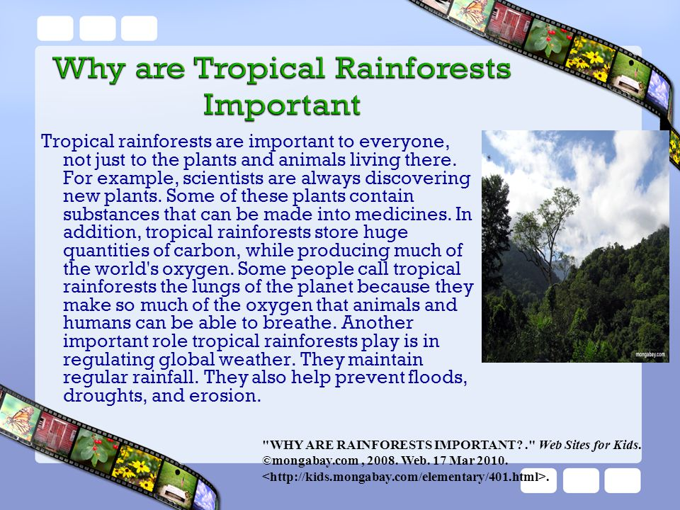 Tropical rainforests are important to everyone, not just to the plants and animals living there. For example, scientists are always discovering new plants. Some of these plants contain substances that can be made into medicines. In addition, tropical rainforests store huge quantities of carbon, while producing much of the world s oxygen. Some people call tropical rainforests the lungs of the planet because they make so much of the oxygen that animals and humans can be able to breathe. Another important role tropical rainforests play is in regulating global weather. They maintain regular rainfall. They also help prevent floods, droughts, and erosion.