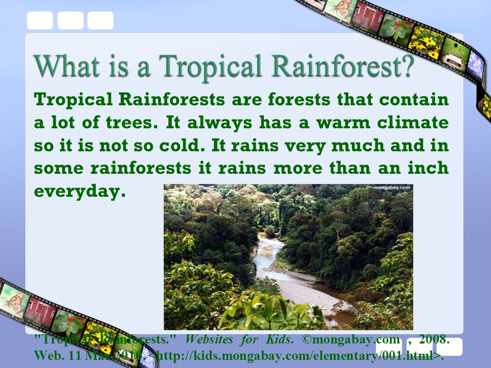 What is a Tropical Rainforest