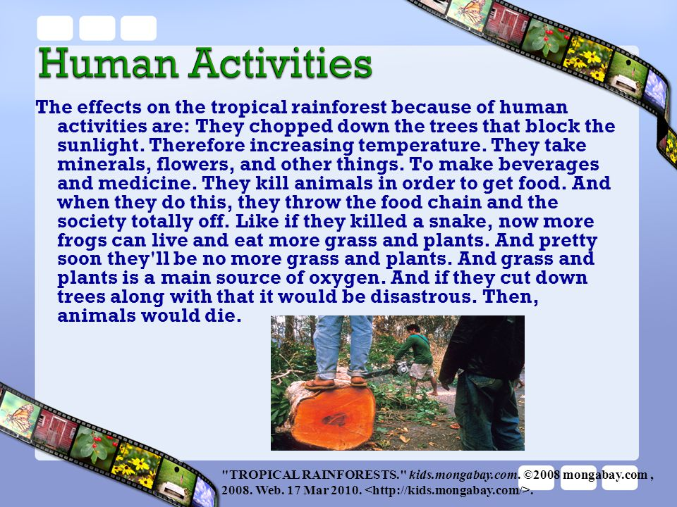 The effects on the tropical rainforest because of human activities are: They chopped down the trees that block the sunlight. Therefore increasing temperature. They take minerals, flowers, and other things. To make beverages and medicine. They kill animals in order to get food. And when they do this, they throw the food chain and the society totally off. Like if they killed a snake, now more frogs can live and eat more grass and plants. And pretty soon they ll be no more grass and plants. And grass and plants is a main source of oxygen. And if they cut down trees along with that it would be disastrous. Then, animals would die.