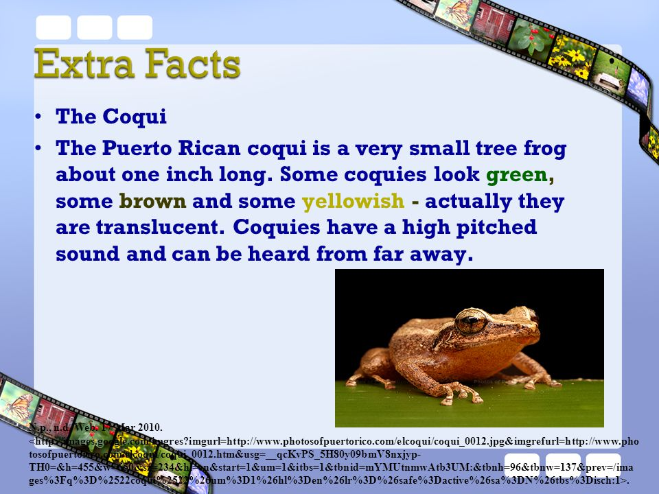 The Coqui