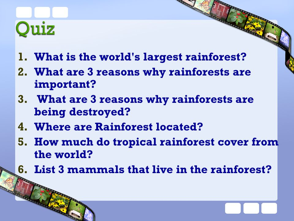 What is the world s largest rainforest