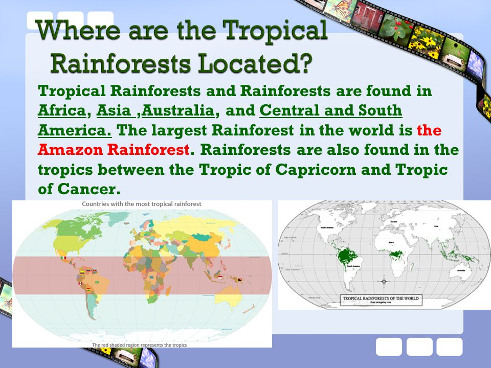 Tropical Rainforests and Rainforests are found in Africa, Asia ,Australia, and Central and South America. The largest Rainforest in the world is the Amazon Rainforest. Rainforests are also found in the tropics between the Tropic of Capricorn and Tropic of Cancer.