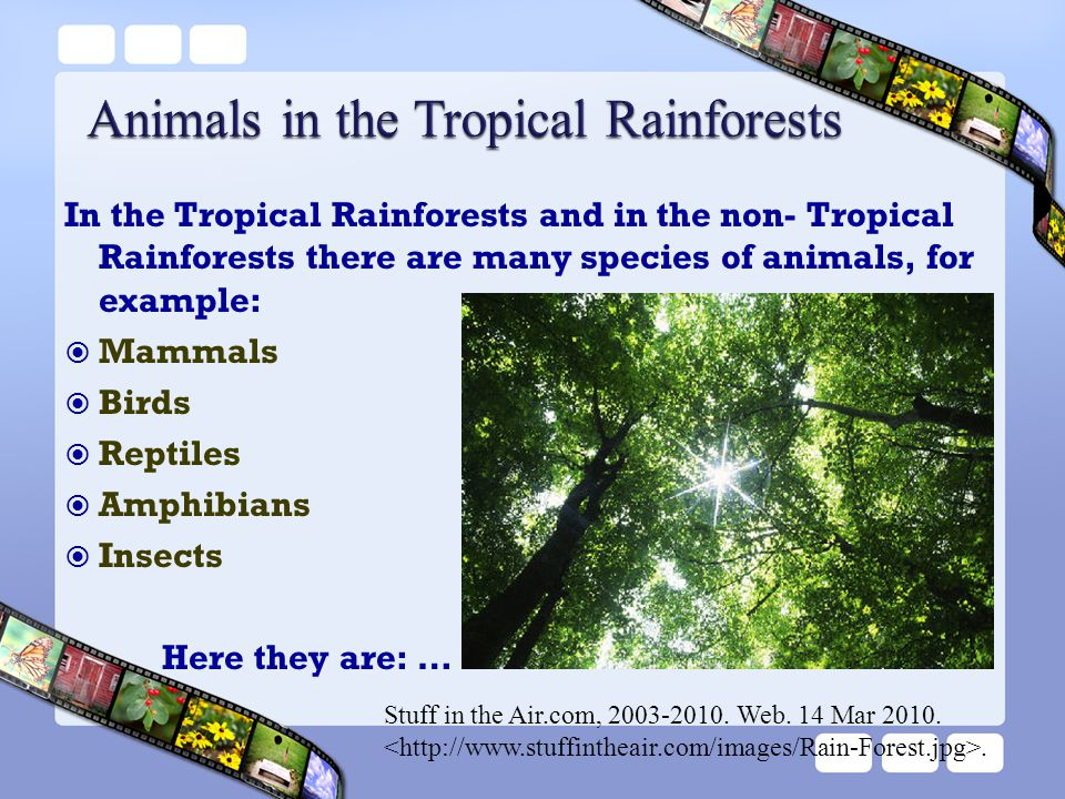 Animals in the Tropical Rainforests