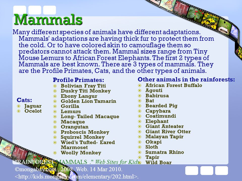 Many different species of animals have different adaptations