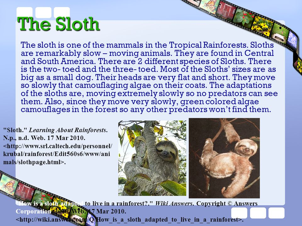 The sloth is one of the mammals in the Tropical Rainforests