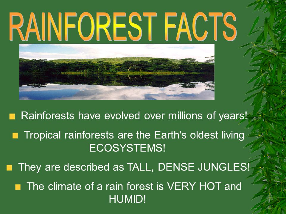 RAINFOREST FACTS Rainforests have evolved over millions of years!