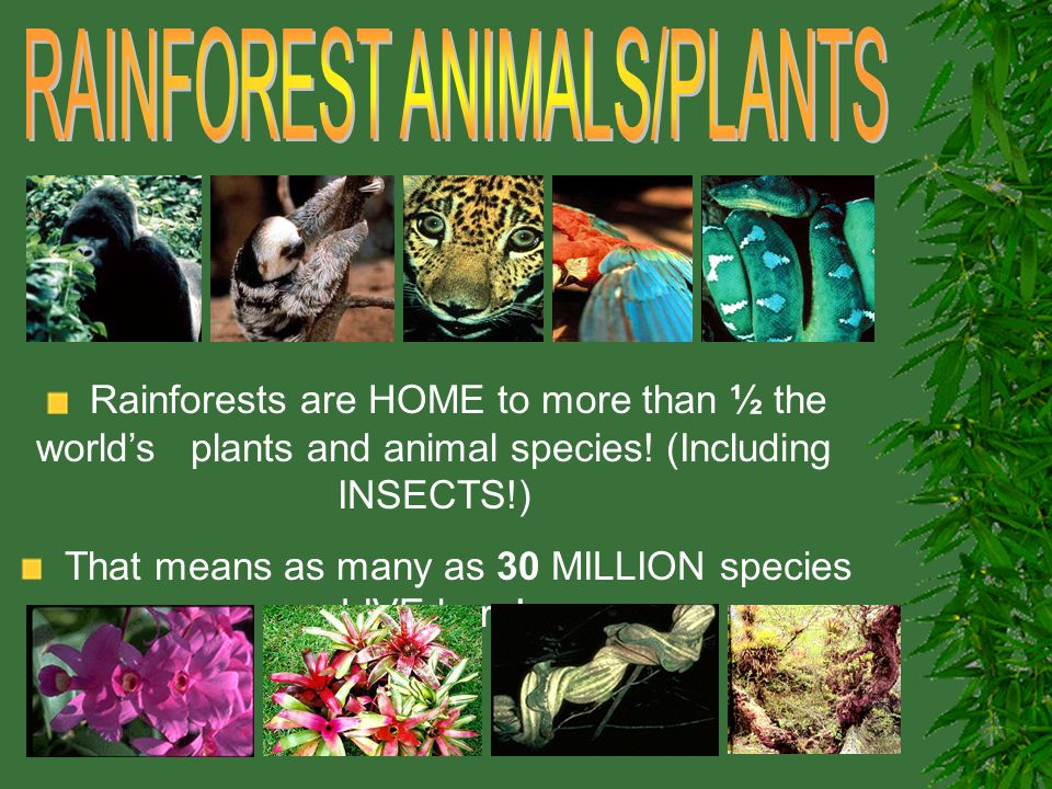 Rainforests Created By Kira Bulva Ed Ppt Video Online