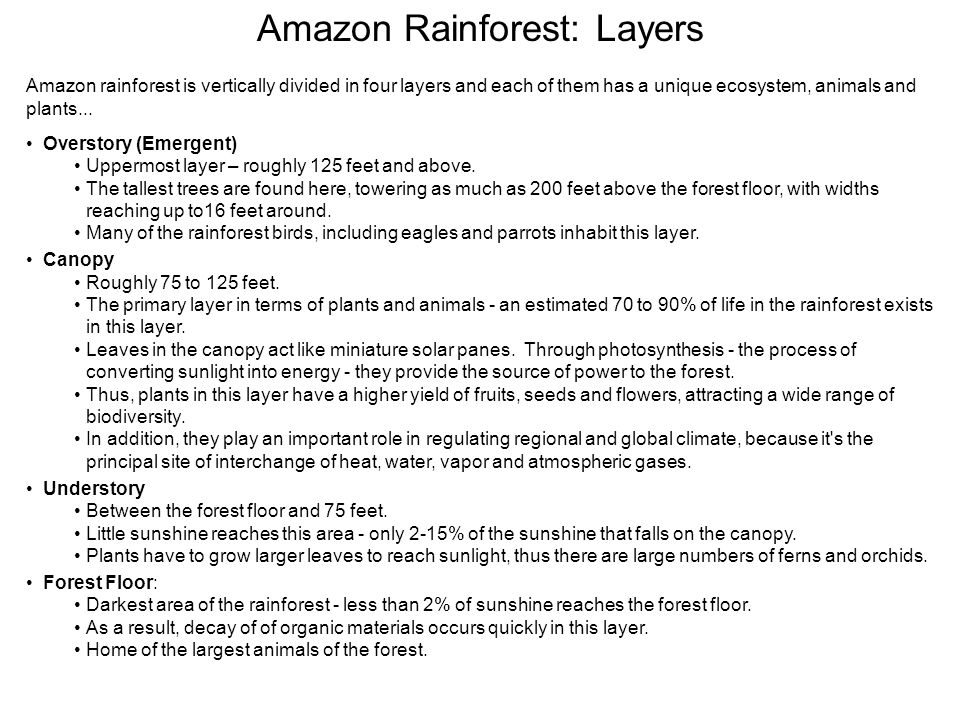 Amazon Rainforest: Layers