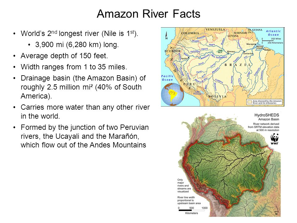 Amazon River Facts World's 2nd longest river (Nile is 1st).