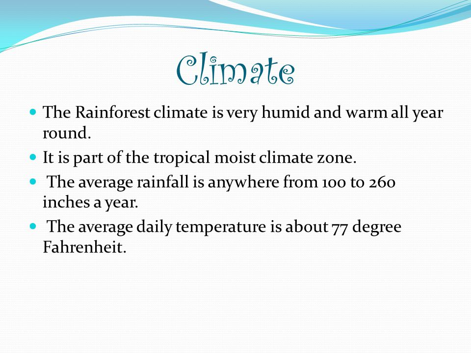 Climate The Rainforest climate is very humid and warm all year round.