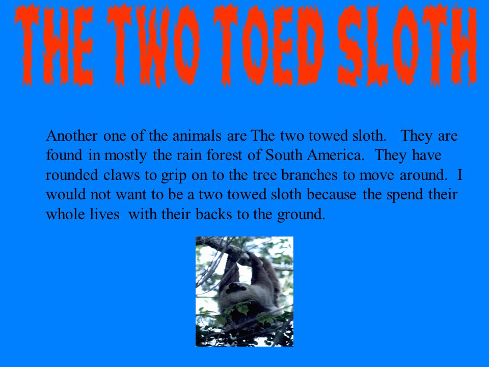 Another one of the animals are The two towed sloth