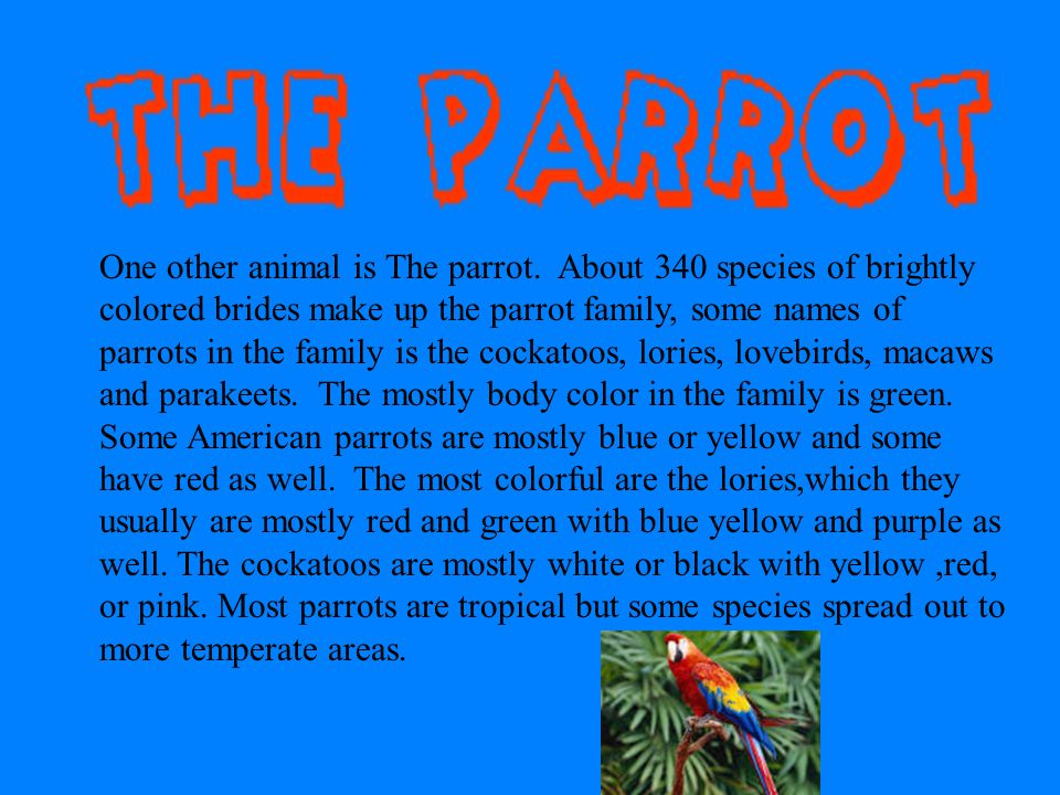 One other animal is The parrot
