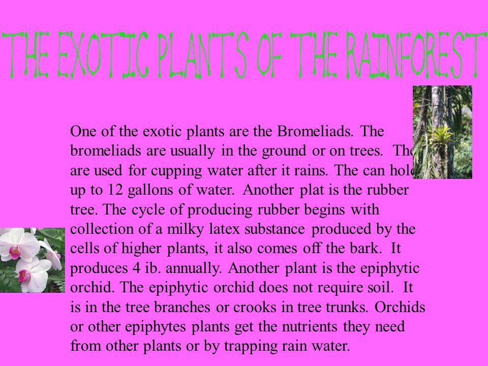 One of the exotic plants are the Bromeliads