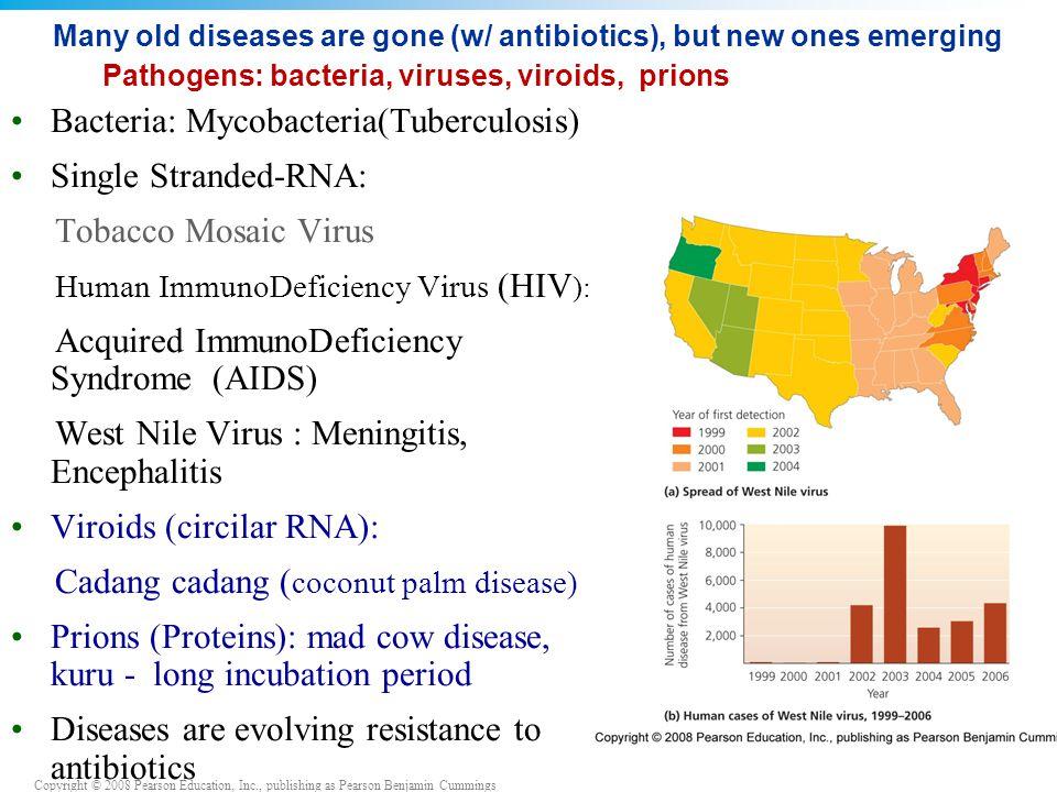 Bacteria: Mycobacteria(Tuberculosis) Single Stranded-RNA: