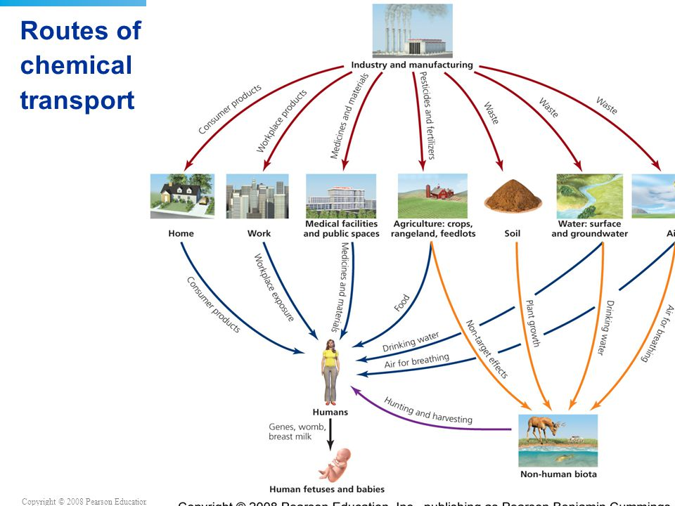 Routes of chemical transport