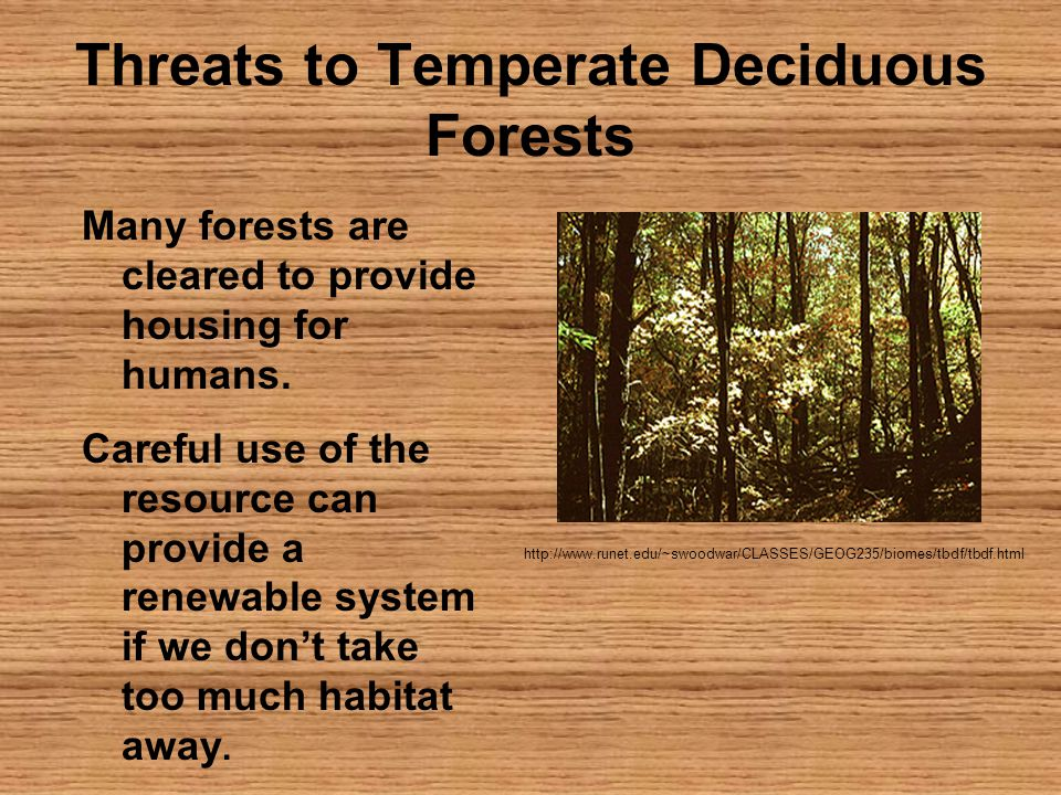 Threats to Temperate Deciduous Forests