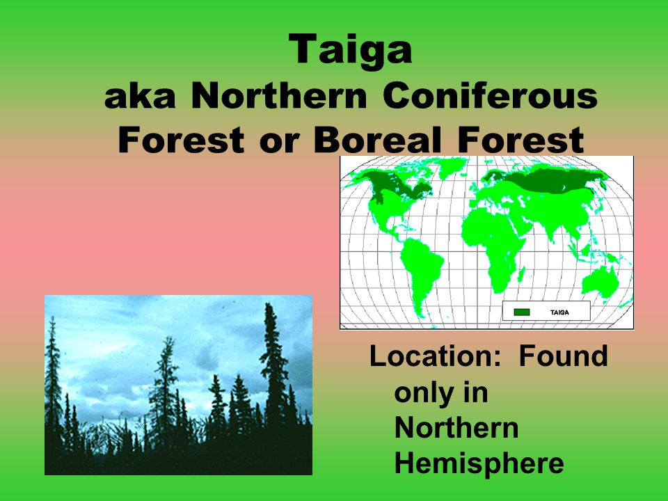 Taiga aka Northern Coniferous Forest or Boreal Forest