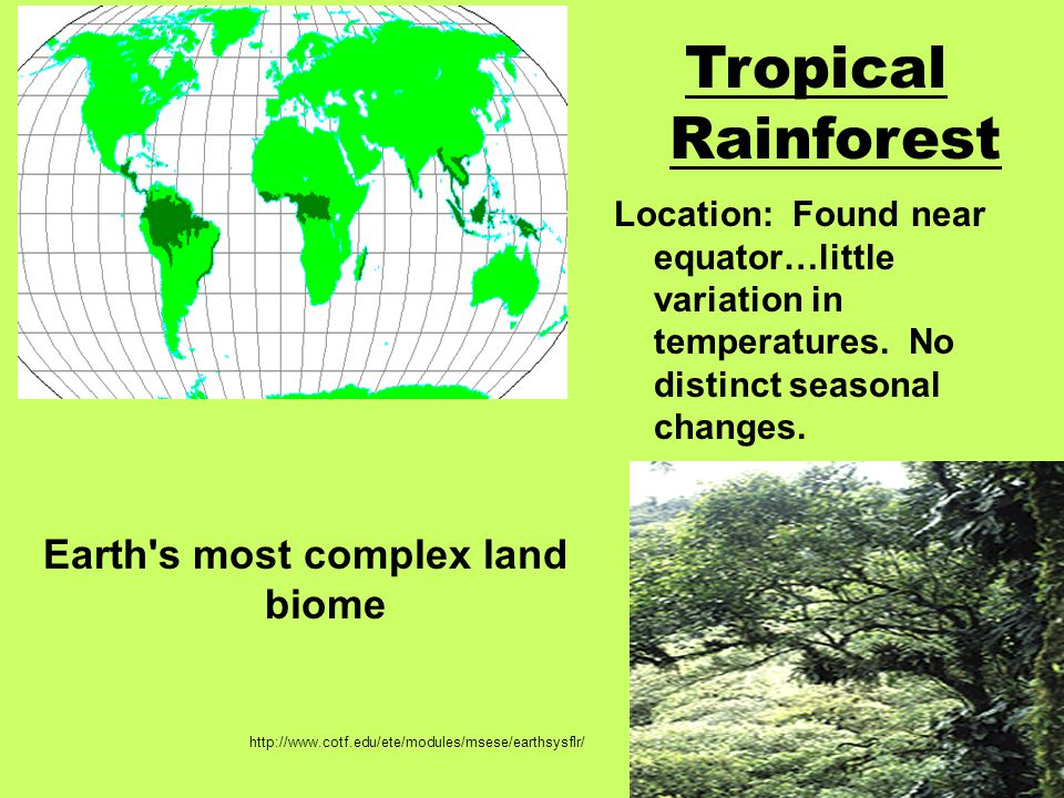 Earth s most complex land biome