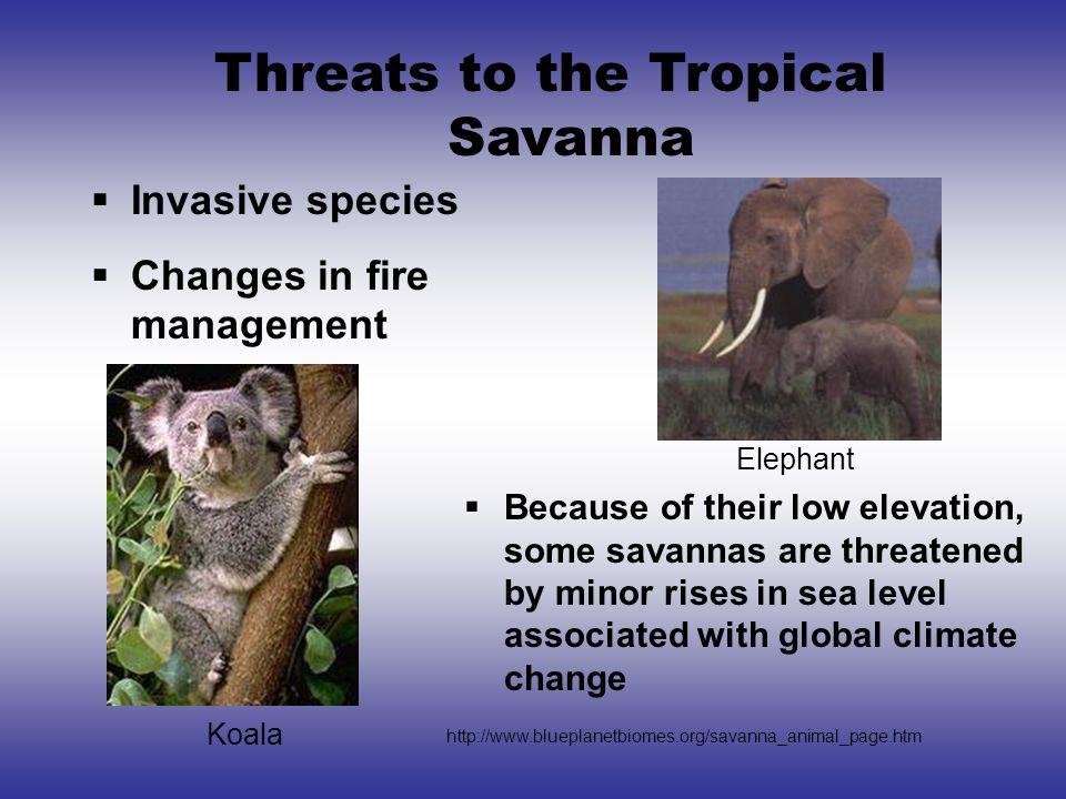 Threats to the Tropical Savanna