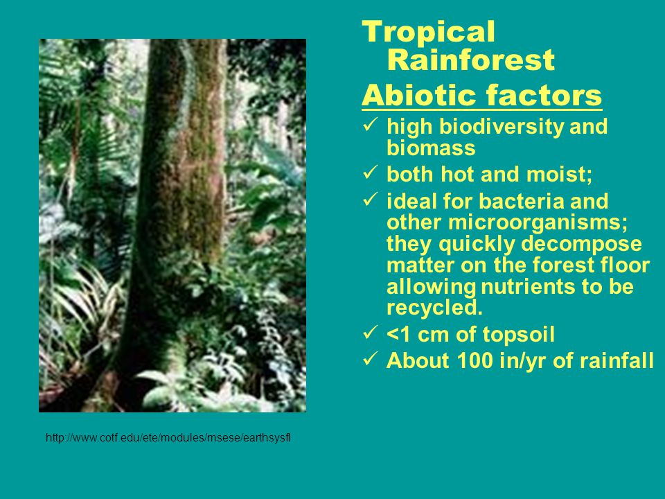 Tropical Rainforest Abiotic factors high biodiversity and biomass