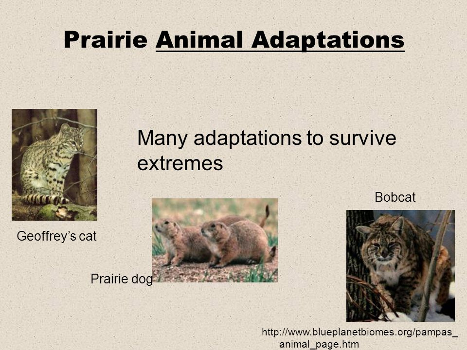Many adaptations to survive extremes