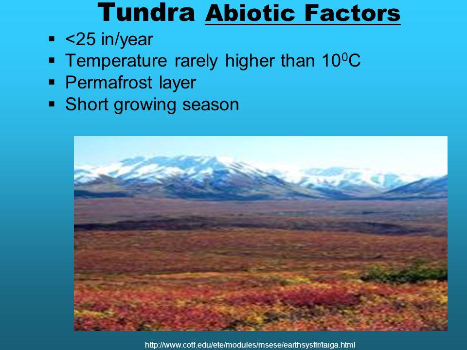 Tundra Abiotic Factors