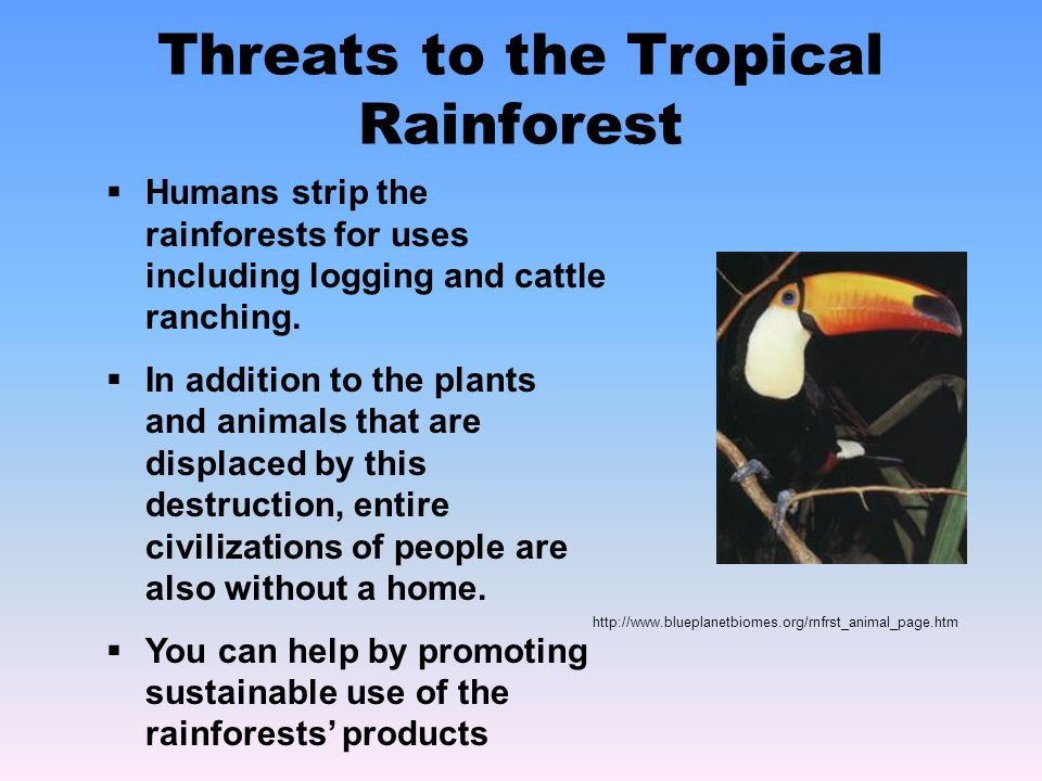 Threats to the Tropical Rainforest