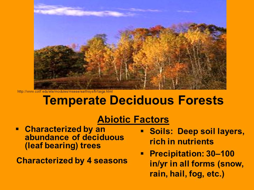 Temperate Deciduous Forests Characterized by 4 seasons