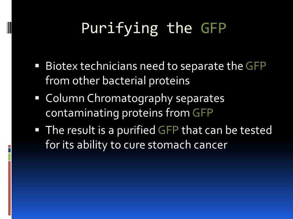 Purifying the GFP Biotex technicians need to separate the GFP from other bacterial proteins.
