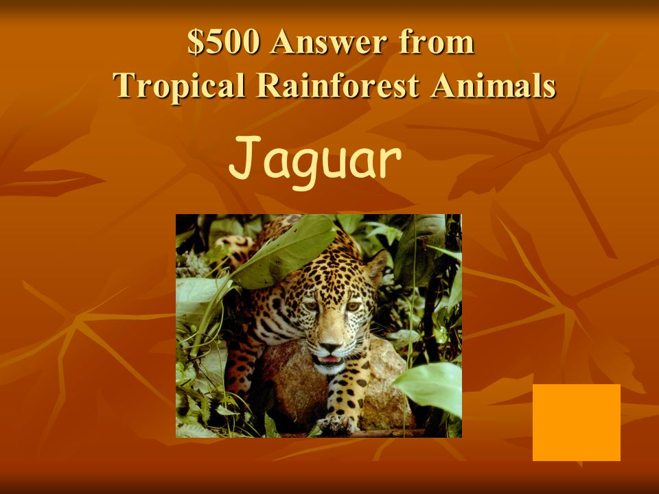 $500 Answer from Tropical Rainforest Animals