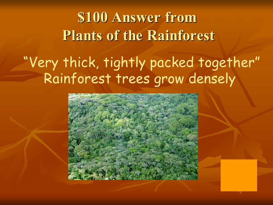 $100 Answer from Plants of the Rainforest