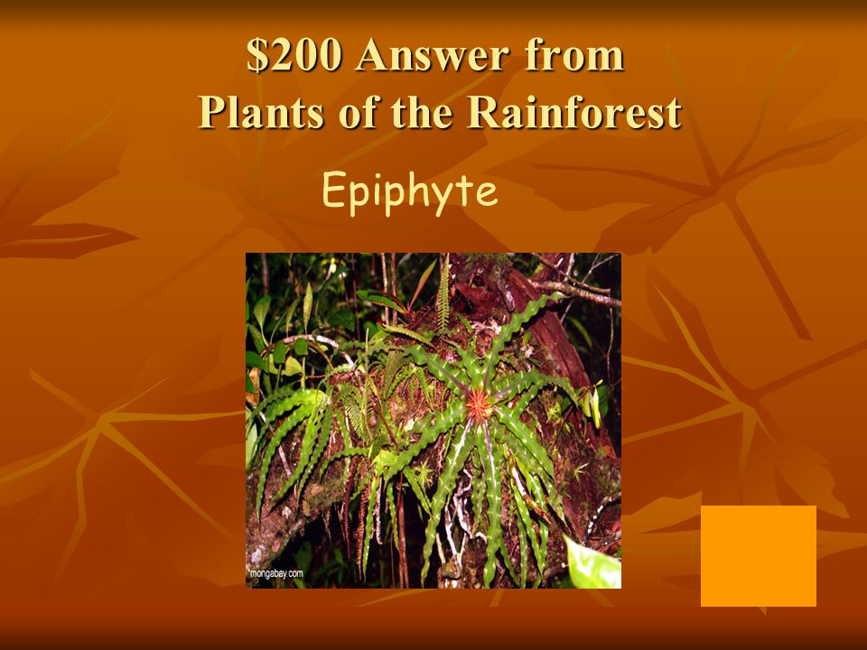 $200 Answer from Plants of the Rainforest