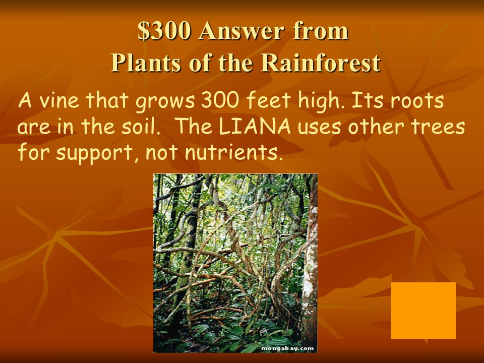 $300 Answer from Plants of the Rainforest