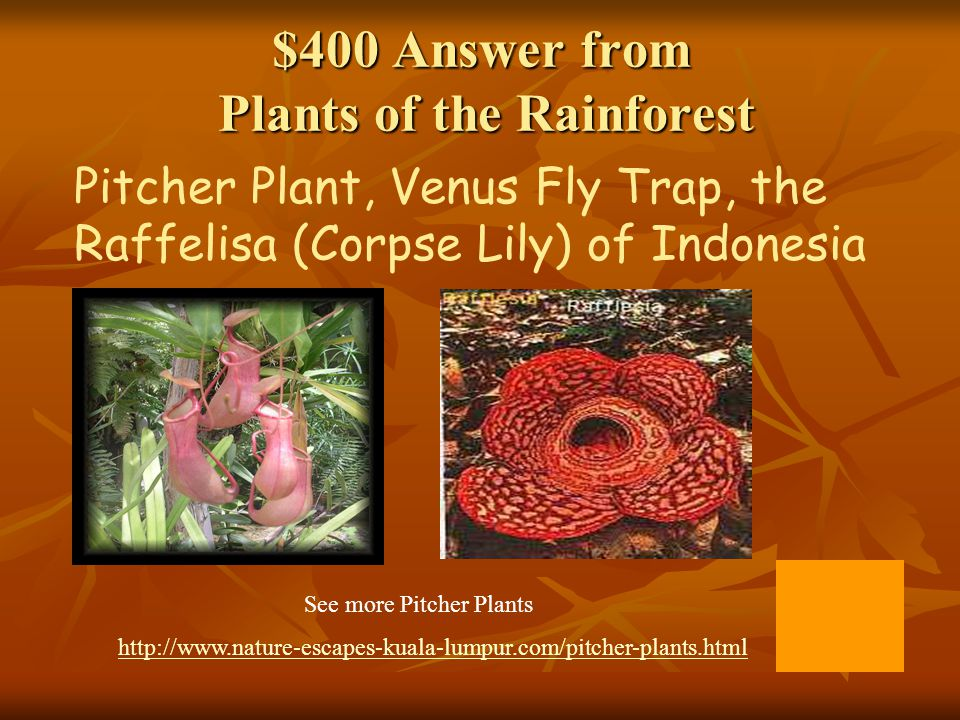 $400 Answer from Plants of the Rainforest