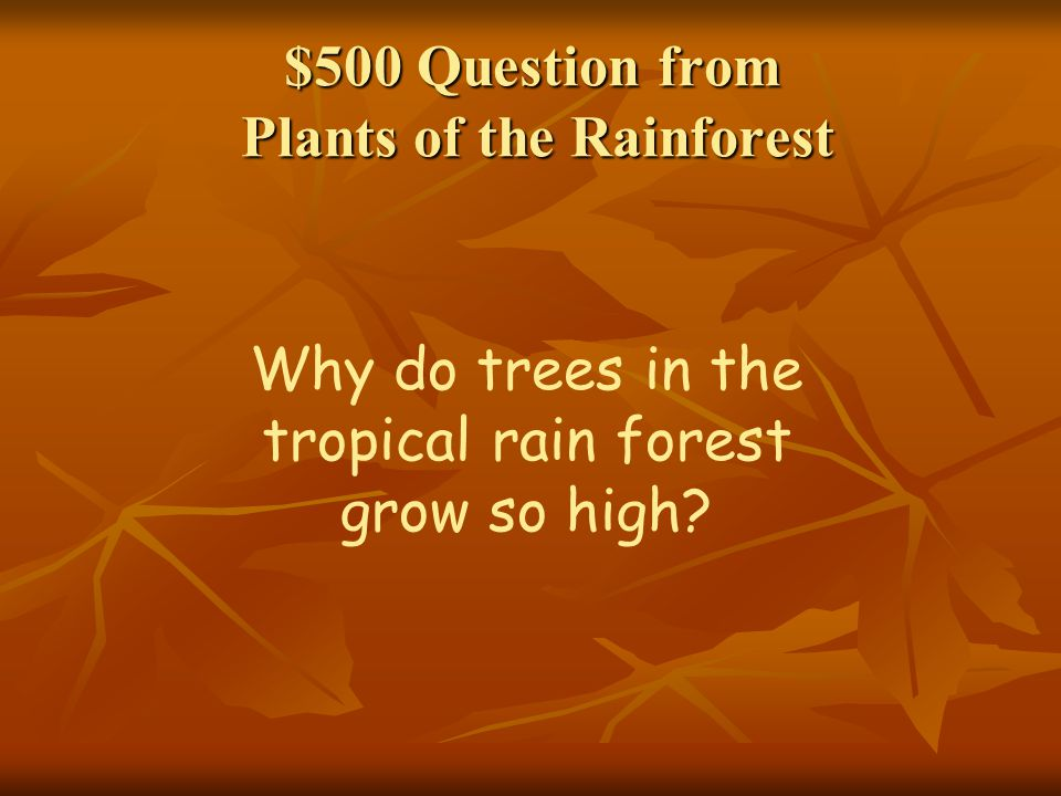 $500 Question from Plants of the Rainforest