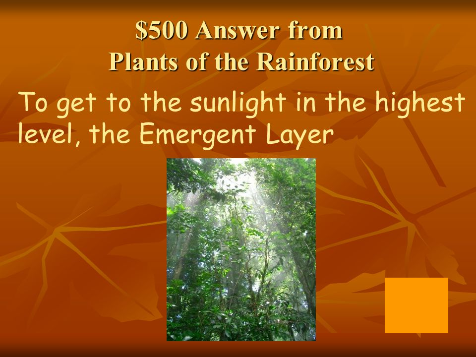 $500 Answer from Plants of the Rainforest