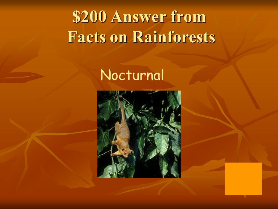 $200 Answer from Facts on Rainforests