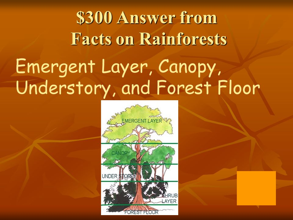 $300 Answer from Facts on Rainforests  sc 1 st  SlidePlayer & Rainforest Jeopardy Q $100 Q $100 Q $100 Q $100 Q $100 Q $200 Q ...