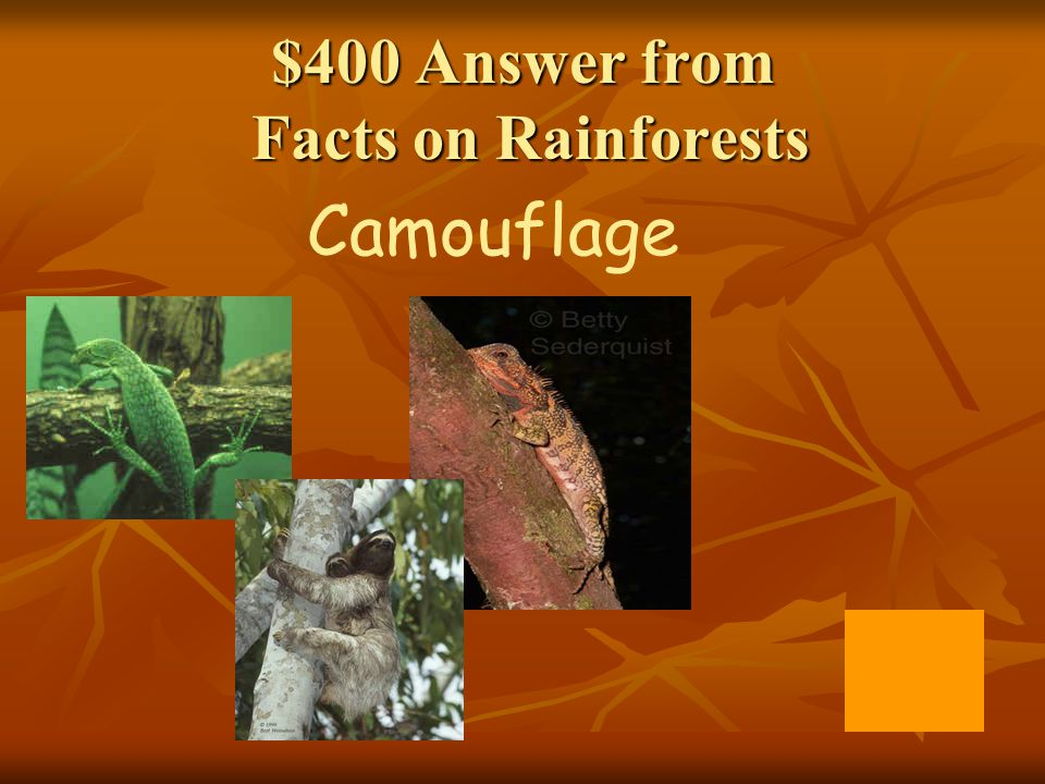 $400 Answer from Facts on Rainforests