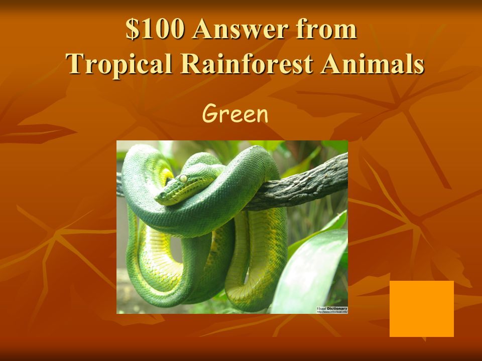 $100 Answer from Tropical Rainforest Animals