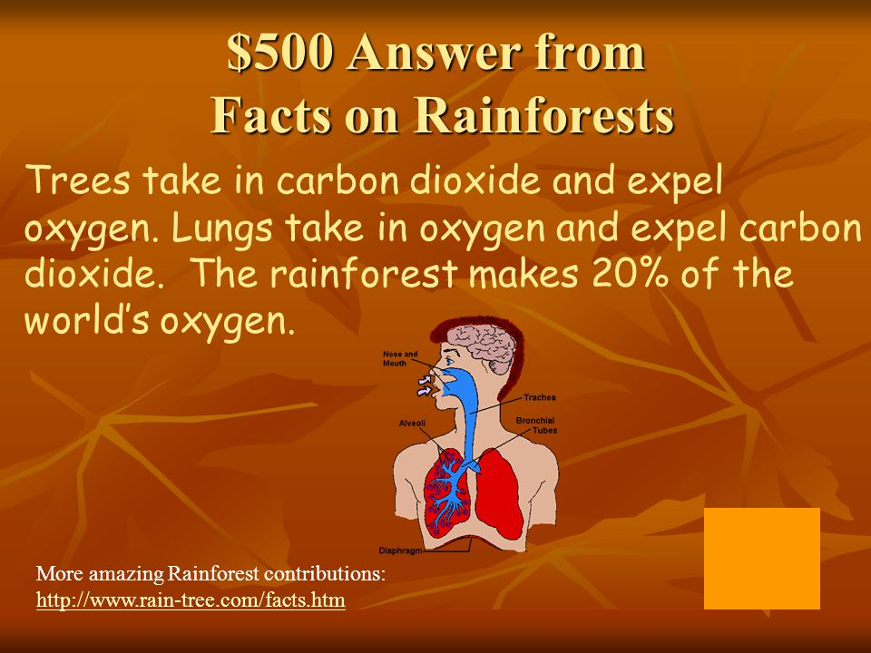 $500 Answer from Facts on Rainforests