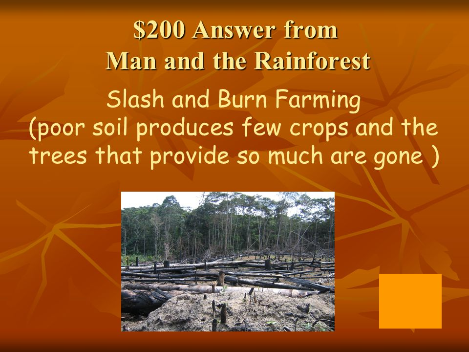 $200 Answer from Man and the Rainforest